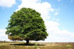 tree-834332_960_720